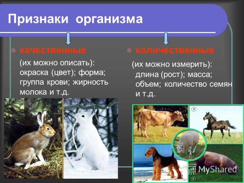 Признаки организма качественные (их можно описать): окраска (цвет); форма; группа крови; жирность молока и т.д. количественные (их можно измерить): длина (рост); масса; объем; количество семян и т.д.