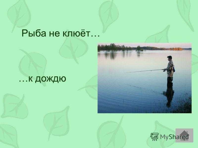 Рыба не клюёт… …к дождю