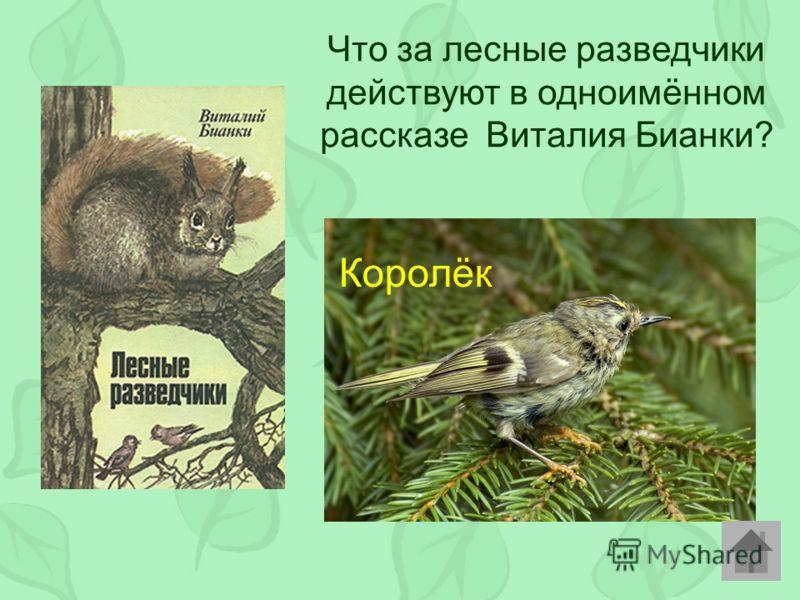 Что за лесные разведчики действуют в одноимённом рассказе Виталия Бианки? Королёк