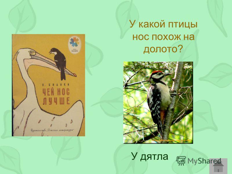 У какой птицы нос похож на долото? У дятла