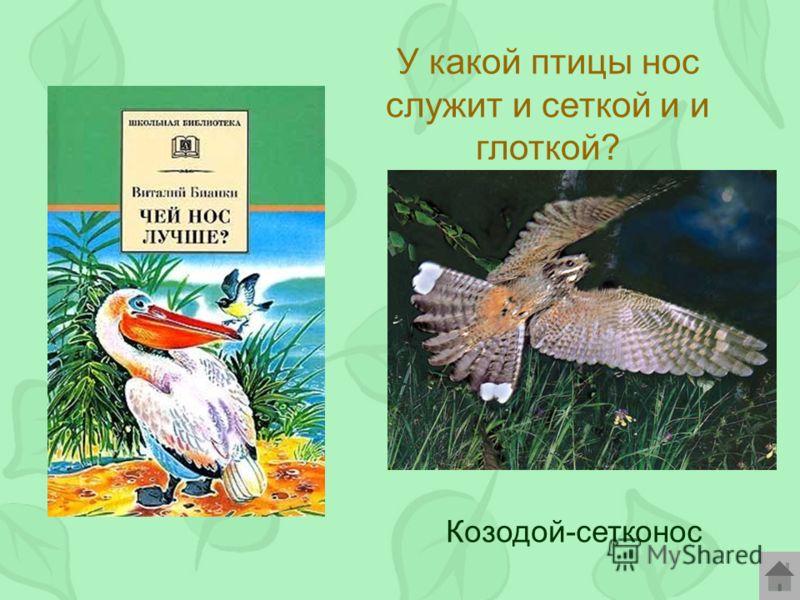 У какой птицы нос служит и сеткой и и глоткой? Козодой-сетконос