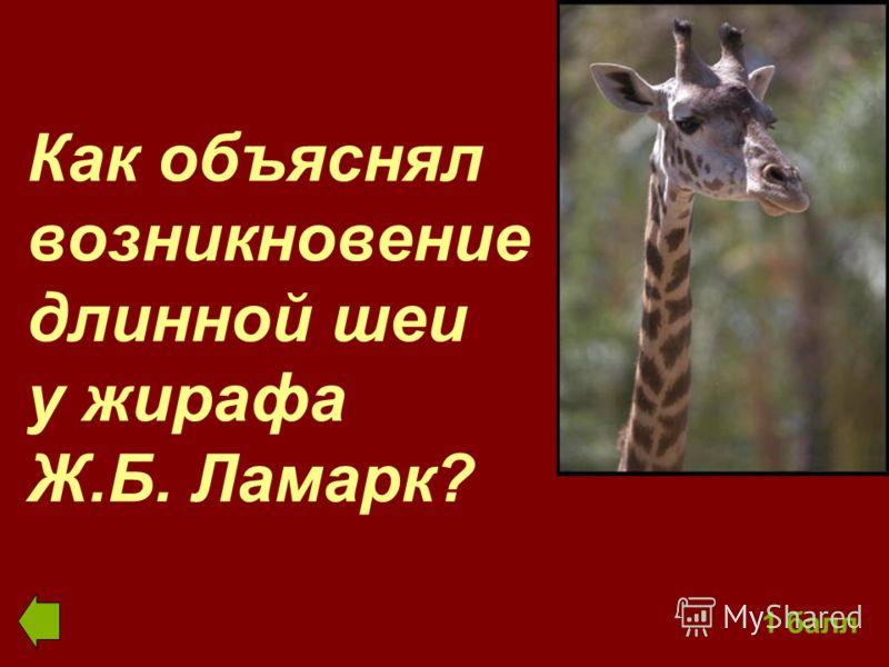 Как объяснял возникновение длинной шеи у жирафа Ж.Б. Ламарк? 1 балл