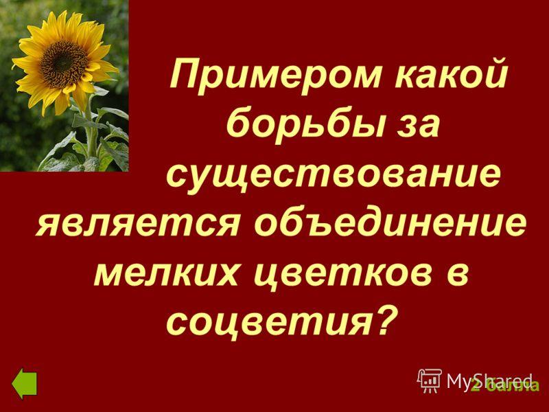 Примером какой борьбы за существование является объединение мелких цветков в соцветия? 2 балла
