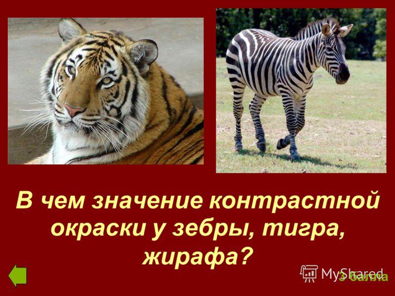 В чем значение контрастной окраски у зебры, тигра, жирафа? 3 балла