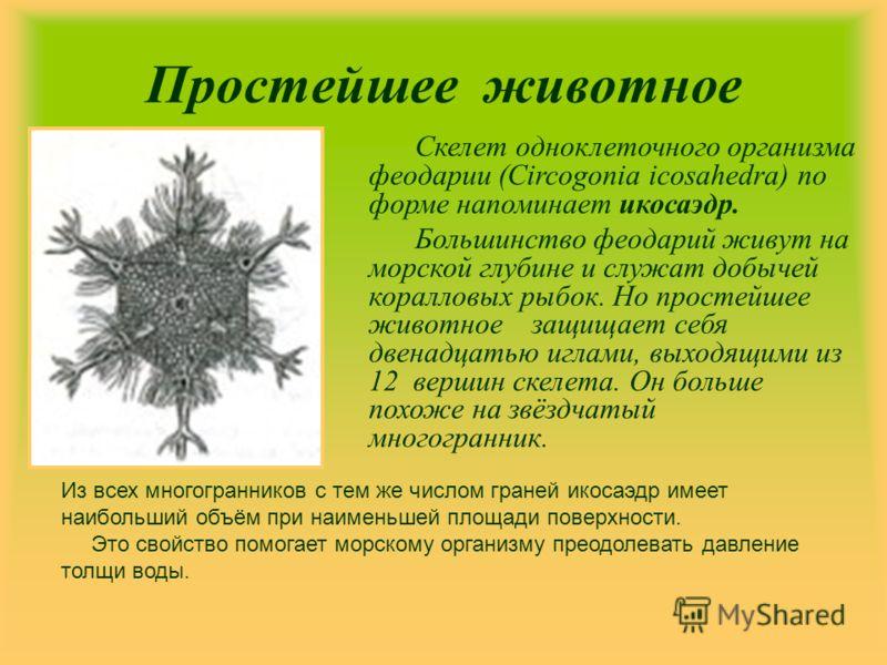 Простейшее животное Скелет одноклеточного организма феодарии (Circogonia icosahedra) по форме напоминает икосаэдр. Большинство феодарий живут на морской глубине и служат добычей коралловых рыбок. Но простейшее животное защищает себя двенадцатью иглам