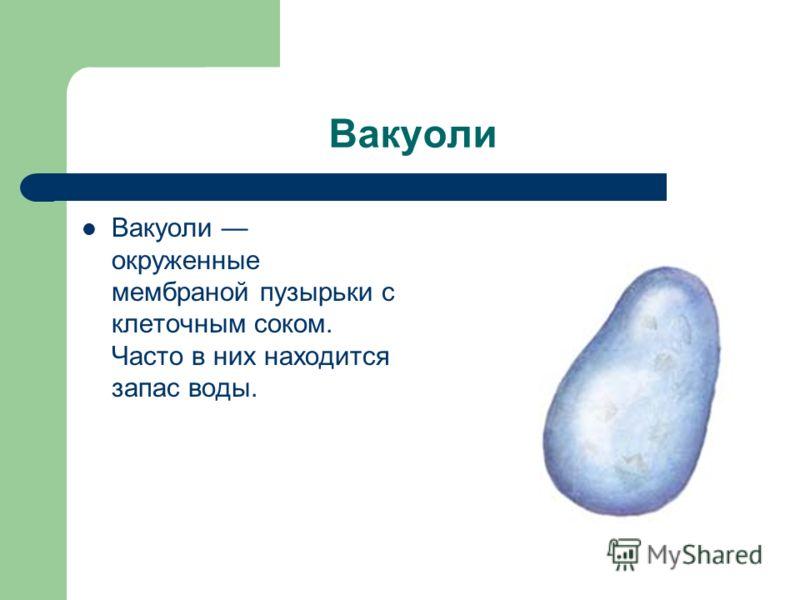 Вакуоли Вакуоли окруженные мембраной пузырьки с клеточным соком. Часто в них находится запас воды.