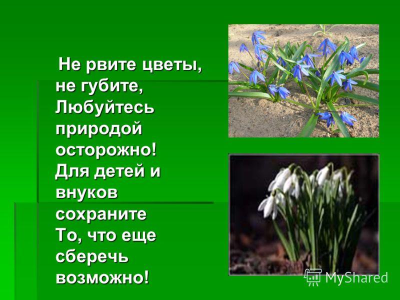 Не рвите цветы, не губите, Любуйтесь природой осторожно! Для детей и внуков сохраните То, что еще сберечь возможно! Не рвите цветы, не губите, Любуйтесь природой осторожно! Для детей и внуков сохраните То, что еще сберечь возможно!