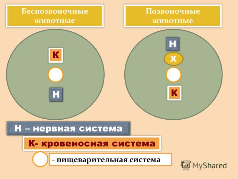 Беспозвоночные животные КК НН Позвоночные животные КК НН Х Н – нервная система К- кровеносная система - пищеварительная система