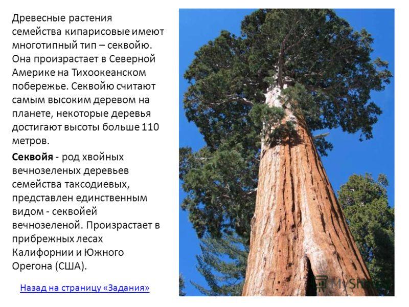 Древесные растения семейства кипарисовые имеют многотипный тип – секвойю. Она произрастает в Северной Америке на Тихоокеанском побережье. Секвойю считают самым высоким деревом на планете, некоторые деревья достигают высоты больше 110 метров. Секвойя