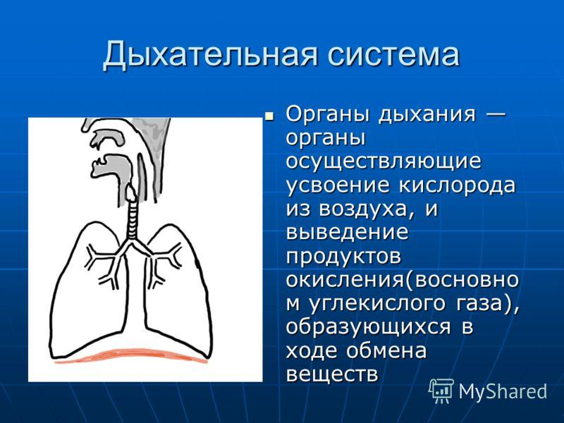 Дыхательная система Органы дыхания органы осуществляющие усвоение кислорода из воздуха, и выведение продуктов окисления(восновно м углекислого газа), образующихся в ходе обмена веществ Органы дыхания органы осуществляющие усвоение кислорода из воздух