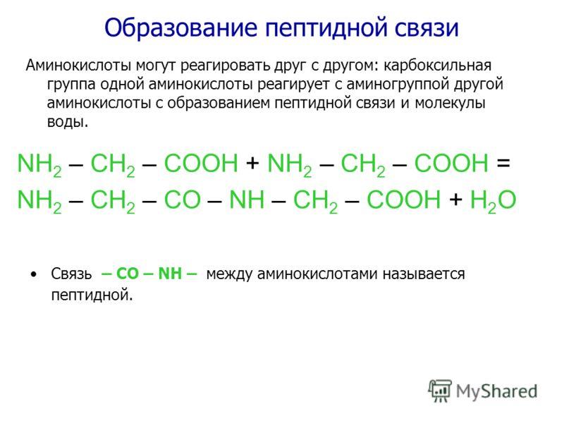 Образование пептидной связи NH 2 – CH 2 – COOH + NH 2 – CH 2 – COOH = NH 2 – CH 2 – CO – NH – CH 2 – COOH + H 2 O Связь – CO – NH – между аминокислотами называется пептидной. Аминокислоты могут реагировать друг с другом: карбоксильная группа одной ам