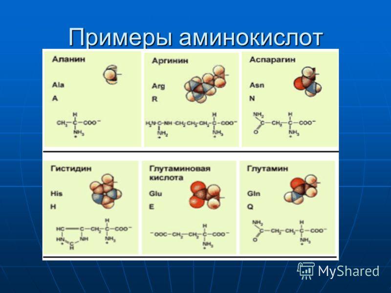 Примеры аминокислот