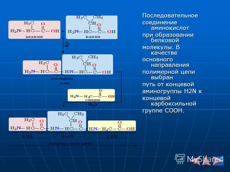 Последовательное соединение аминокислот при образовании белковой молекулы. В качестве основного направления полимерной цепи выбран путь от концевой аминогруппы H2N к концевой карбоксильной группе COOH.