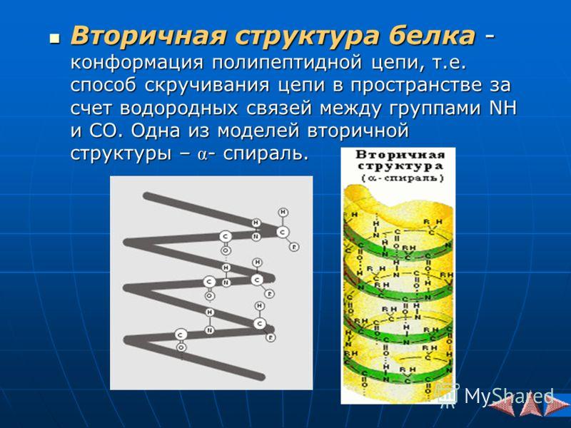 Вторичная структура белка - конформация полипептидной цепи, т.е. способ скручивания цепи в пространстве за счет водородных связей между группами NH и CO. Одна из моделей вторичной структуры – α - спираль. Вторичная структура белка - конформация полип