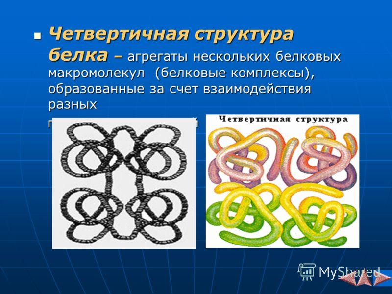 Четвертичная структура белка – агрегаты нескольких белковых макромолекул (белковые комплексы), образованные за счет взаимодействия разных Четвертичная структура белка – агрегаты нескольких белковых макромолекул (белковые комплексы), образованные за с