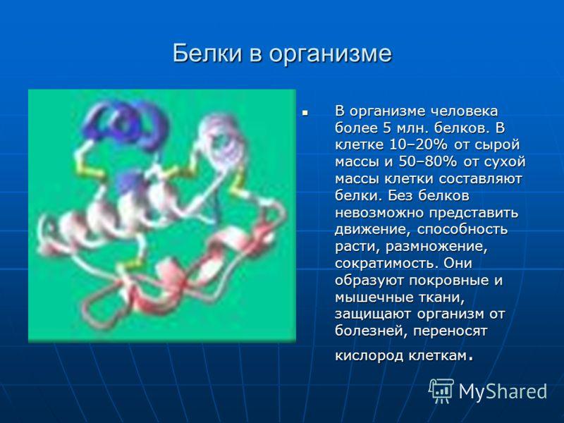 Белки в организме В организме человека более 5 млн. белков. В клетке 10–20% от сырой массы и 50–80% от сухой массы клетки составляют белки. Без белков невозможно представить движение, способность расти, размножение, сократимость. Они образуют покровн
