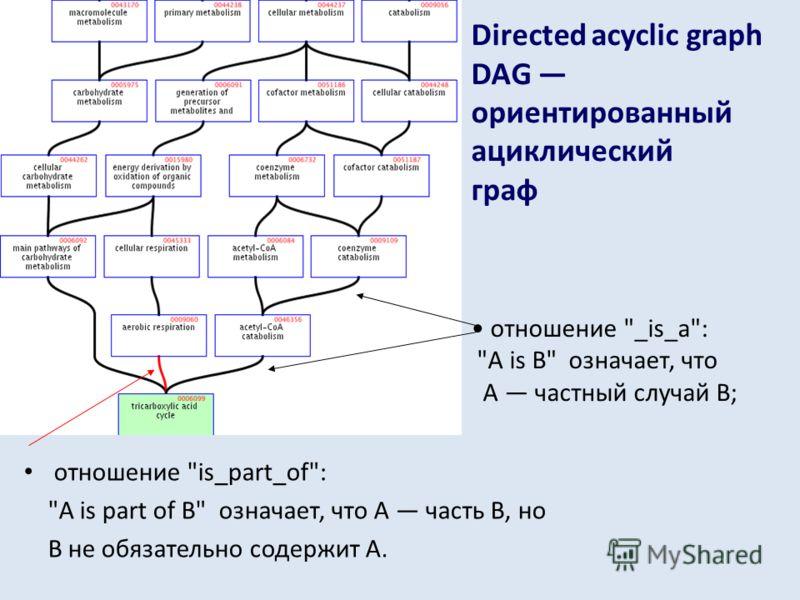 Directed acyclic graph DAG ориентированный ациклический граф отношение is_part_of: A is part of B означает, что А часть В, но В не обязательно содержит А. отношение _is_a: A is B означает, что А частный случай В;