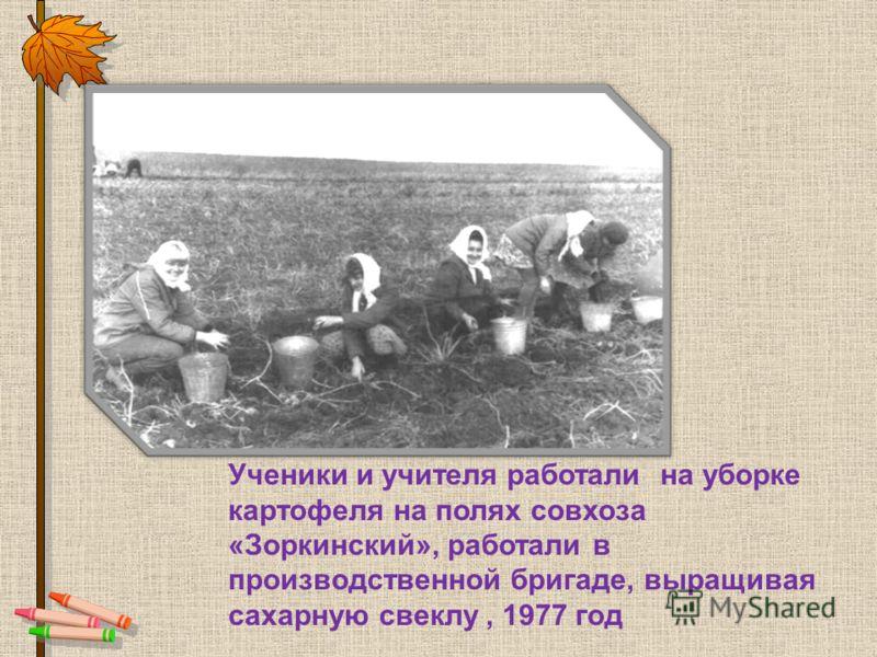 Ученики и учителя работали на уборке картофеля на полях совхоза «Зоркинский», работали в производственной бригаде, выращивая сахарную свеклу, 1977 год