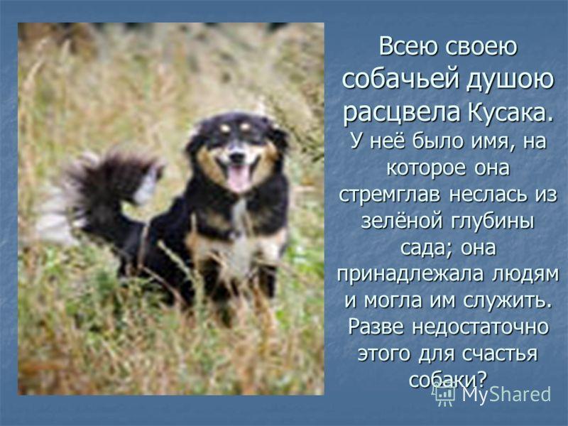 Всею своею собачьей душою расцвела Кусака. У неё было имя, на которое она стремглав неслась из зелёной глубины сада; она принадлежала людям и могла им служить. Разве недостаточно этого для счастья собаки?