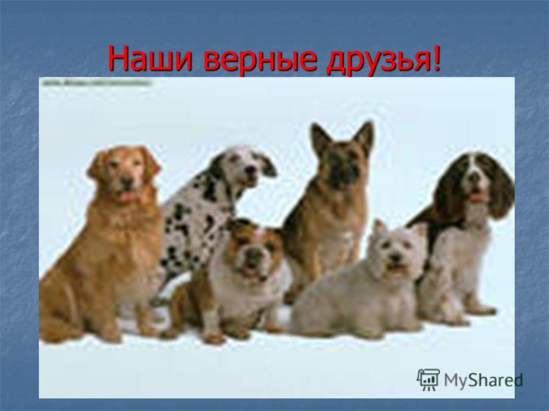 Наши верные друзья!