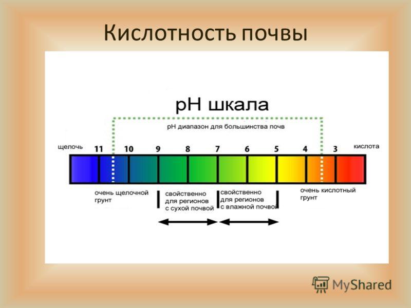 Презентация Состав И Свойства Почвы