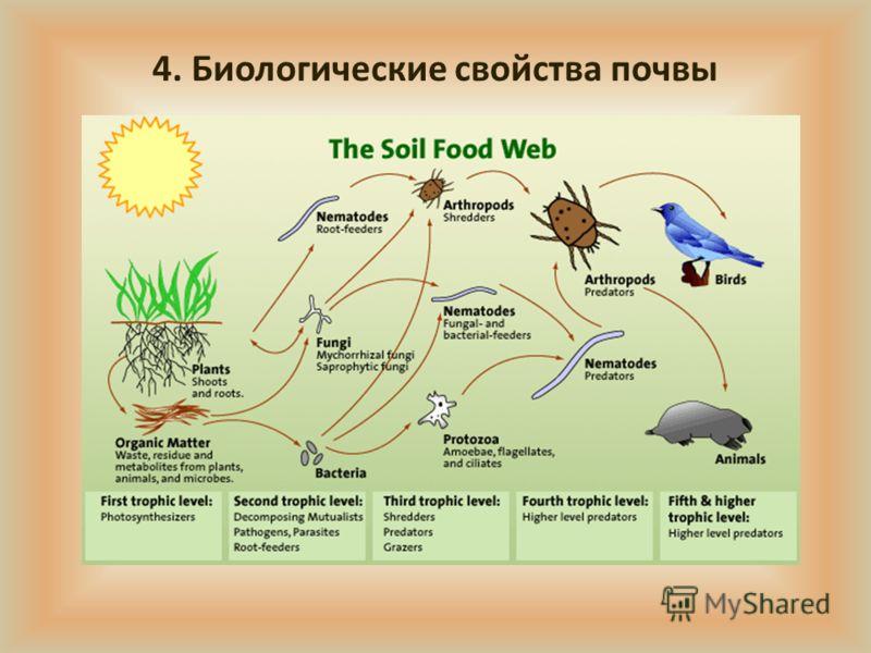 4. Биологические свойства почвы