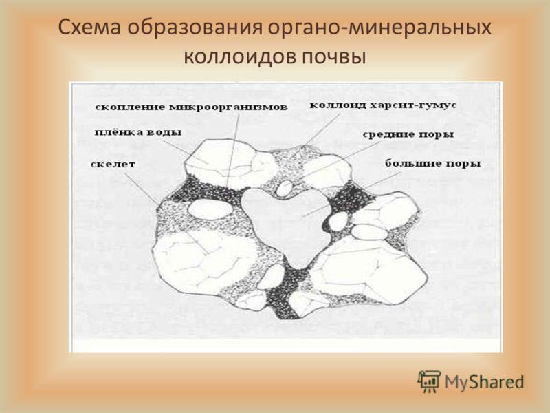 Схема образования органо-минеральных коллоидов почвы