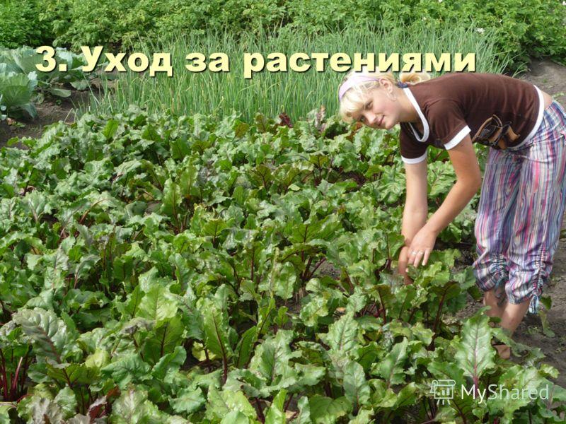 3. Уход за растениями