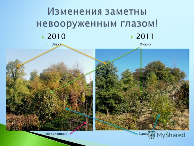 2010 Ольха Шелковица 2011 Инжир Каштан
