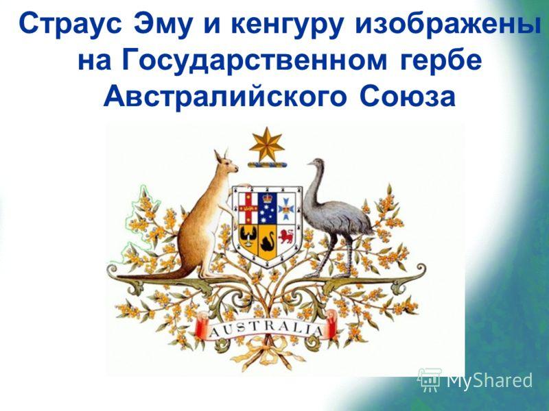 Страус Эму и кенгуру изображены на Государственном гербе Австралийского Союза
