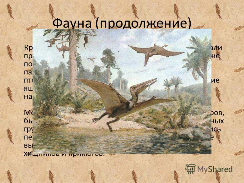 Фауна (продолжение) Крылатые пресмыкающиеся – птеродактили занимали практически все ниши воздушных хищников, хотя уже появились настоящие птицы. Таким образом, параллельно существовали летающие ящеры - птерозавры, планирующие, а может быть и летающие