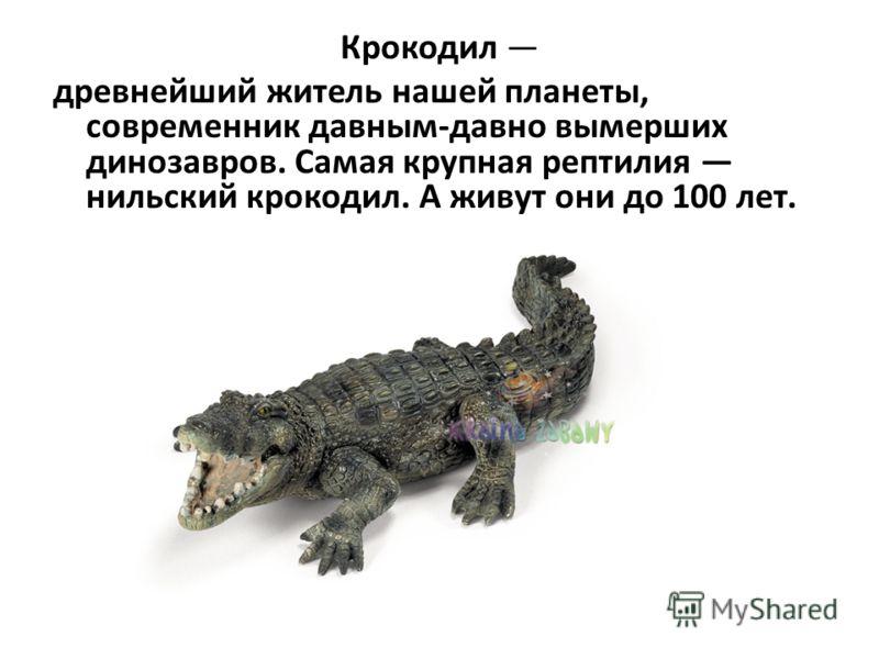 Крокодил древнейший житель нашей планеты, современник давным-давно вымерших динозавров. Самая крупная рептилия нильский крокодил. А живут они до 100 лет.