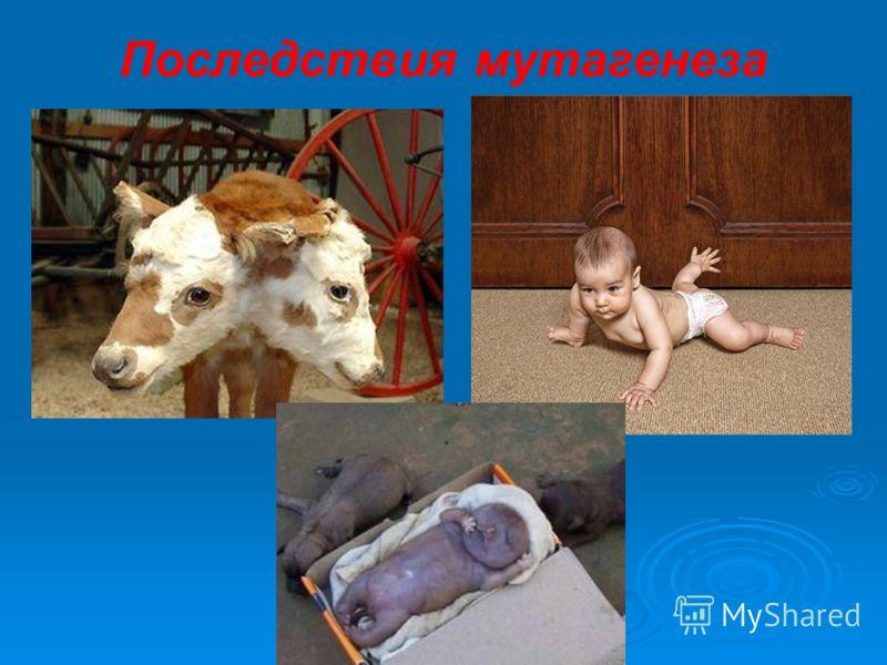 Последствия мутагенеза