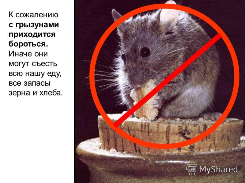 К сожалению с грызунами приходится бороться. Иначе они могут съесть всю нашу еду, все запасы зерна и хлеба.