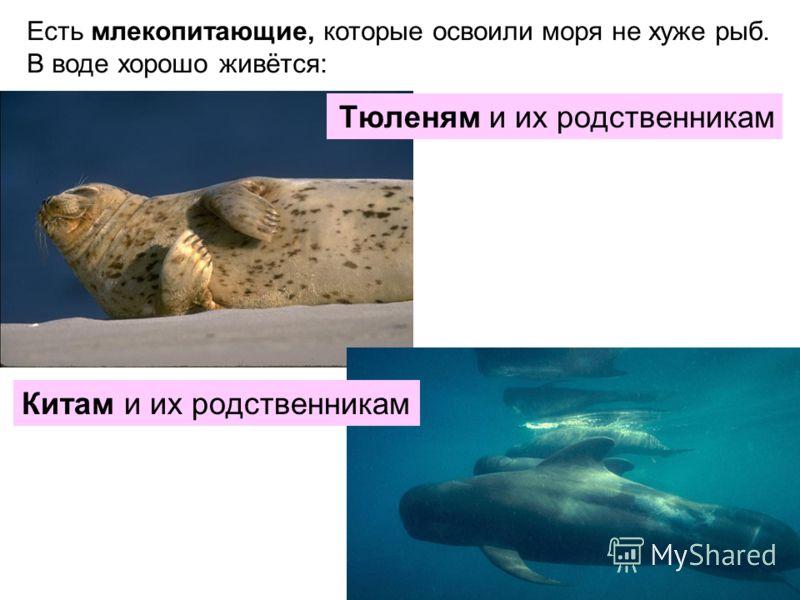 Есть млекопитающие, которые освоили моря не хуже рыб. В воде хорошо живётся: Тюленям и их родственникам Китам и их родственникам