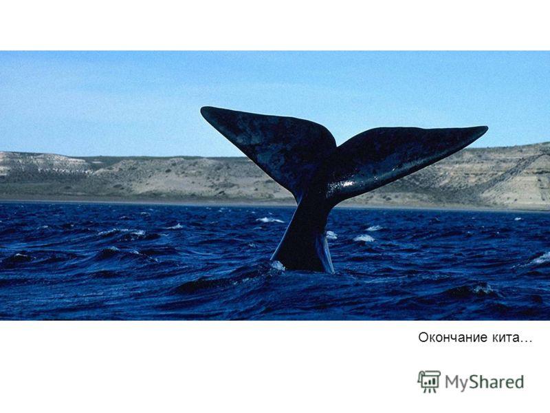 Окончание кита…