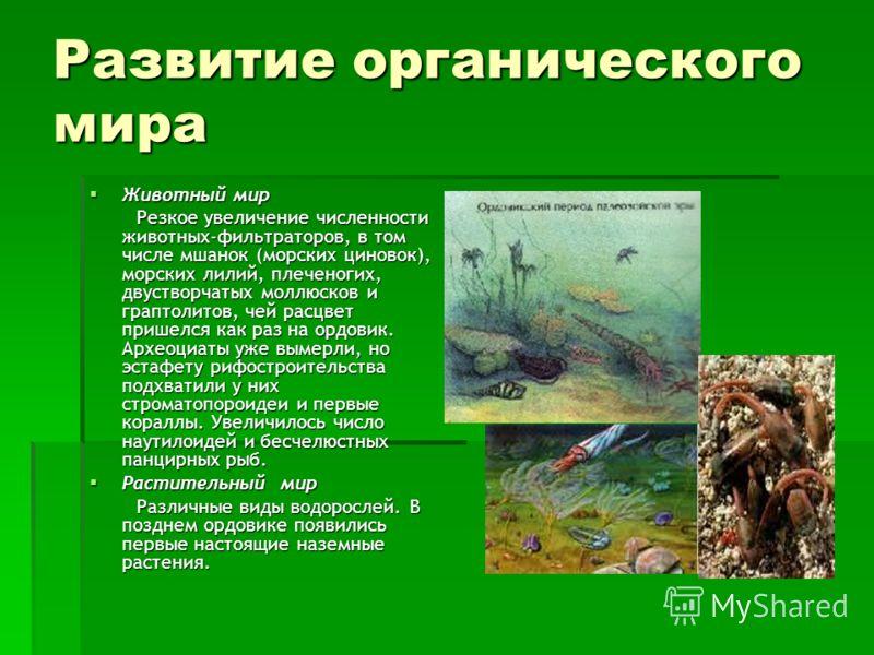 Животный мир Животный мир Резкое увеличение численности животных-фильтраторов, в том числе мшанок (морских циновок), морских лилий, плеченогих, двустворчатых моллюсков и граптолитов, чей расцвет пришелся как раз на ордовик. Археоциаты уже вымерли, но