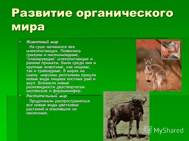 Развитие органического мира Животный мир Животный мир На суше начинался век млекопитающих. Появились грызуны и насекомоядные,