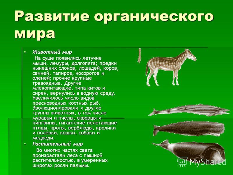 Развитие органического мира Животный мир Животный мир На суше появились летучие мыши, лемуры, долгопята; предки нынешних слонов, лошадей, коров, свиней, тапиров, носорогов и оленей; прочие крупные травоядные. Другие млекопитающие, типа китов и сирен,