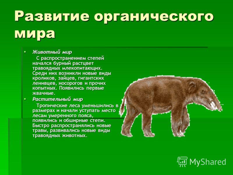 Развитие органического мира Животный мир Животный мир С распространением степей начался бурный растцвет травоядных млекопитающих. Среди них возникли новые виды кроликов, зайцев, гигантских ленивцев, носорогов и прочих копытных. Появились первые жвачн