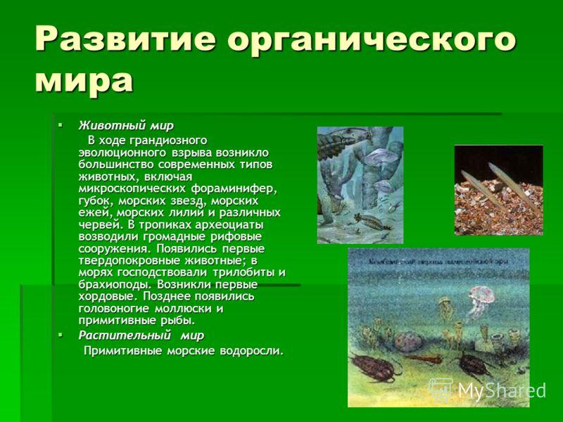 Развитие органического мира Животный мир Животный мир В ходе грандиозного эволюционного взрыва возникло большинство современных типов животных, включая микроскопических фораминифер, губок, морских звезд, морских ежей, морских лилий и различных червей