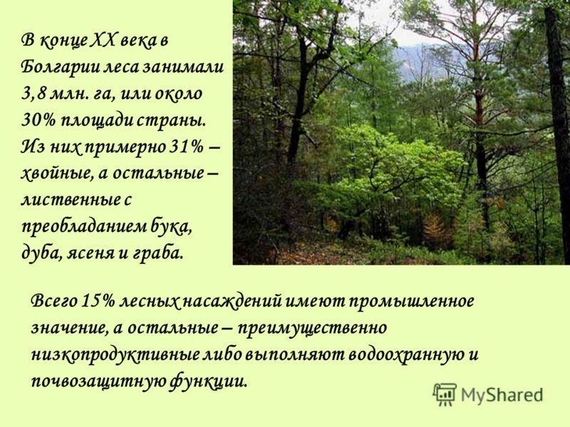 В конце XX века в Болгарии леса занимали 3,8 млн. га, или около 30% площади страны. Из них примерно 31% – хвойные, а остальные – лиственные с преобладанием бука, дуба, ясеня и граба. Всего 15% лесных насаждений имеют промышленное значение, а остальны