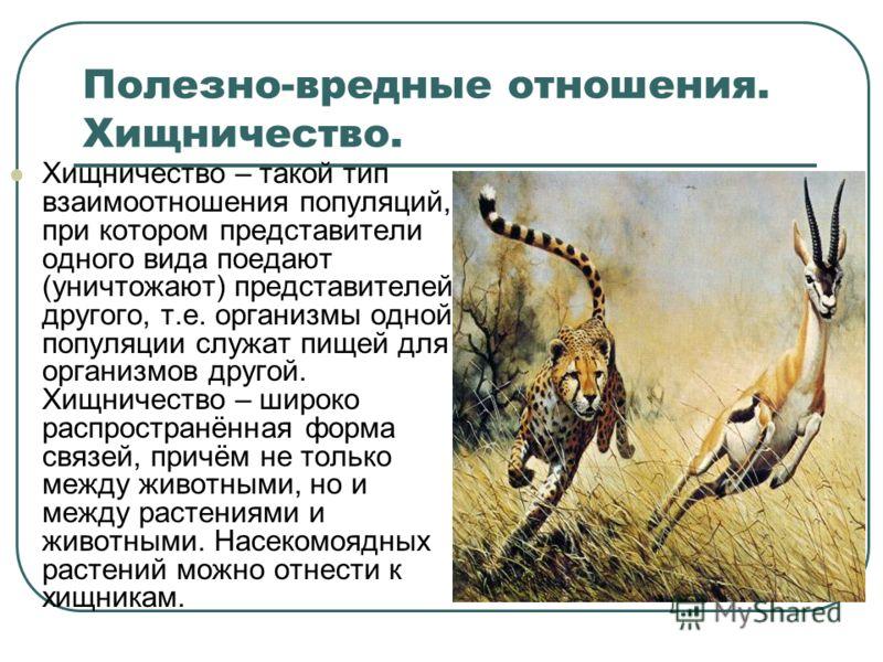 Полезно-вредные отношения. Хищничество. Хищничество – такой тип взаимоотношения популяций, при котором представители одного вида поедают (уничтожают) представителей другого, т.е. организмы одной популяции служат пищей для организмов другой. Хищничест