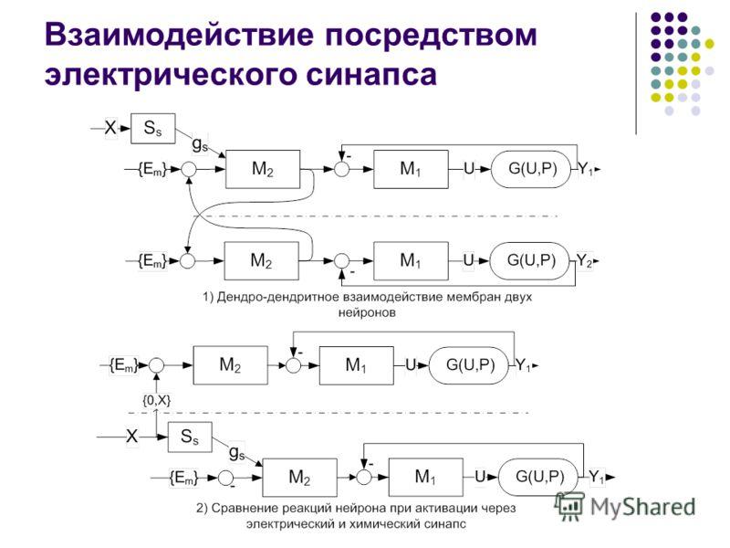 Взаимодействие посредством электрического синапса