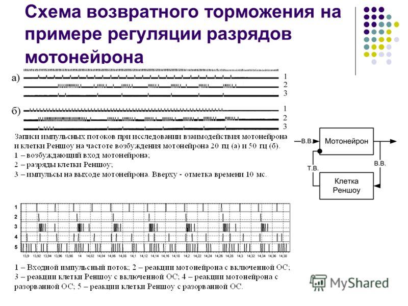Схема возвратного торможения на примере регуляции разрядов мотонейрона