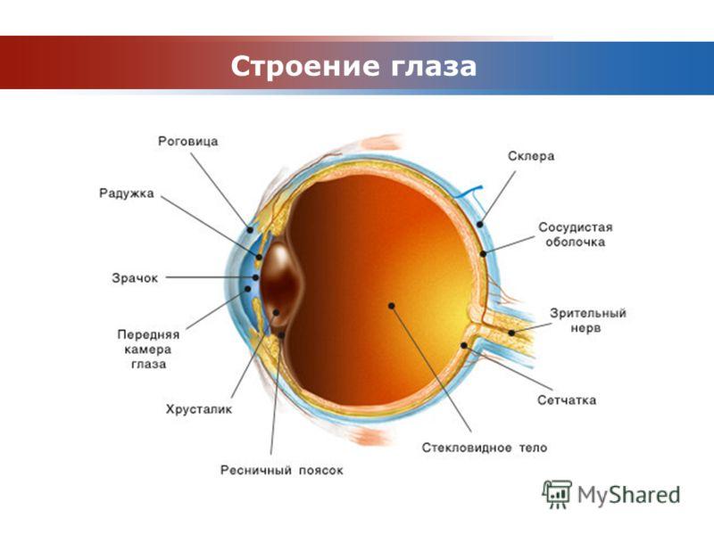 Www themegallery com company logo строение глаза
