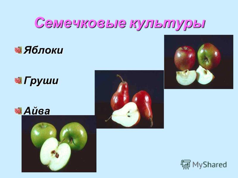 Семечковые культуры ЯблокиГрушиАйва