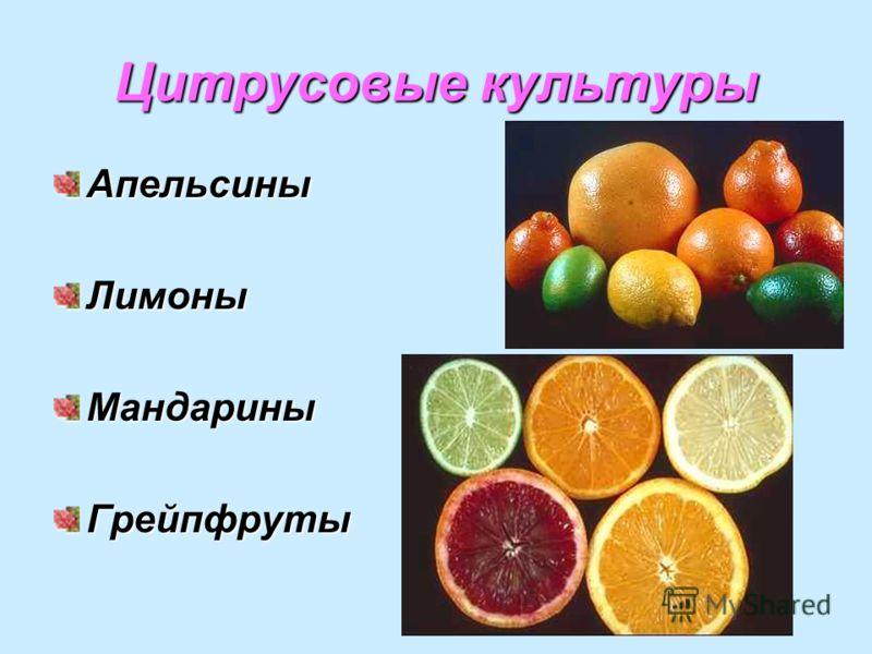 Цитрусовые культуры АпельсиныЛимоныМандариныГрейпфруты