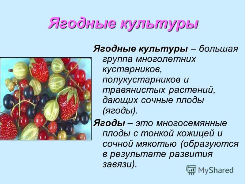 Ягодные культуры Ягодные культуры Ягодные культуры – большая группа многолетних кустарников, полукустарников и травянистых растений, дающих сочные плоды (ягоды). Ягоды Ягоды – это многосемянные плоды с тонкой кожицей и сочной мякотью (образуются в ре