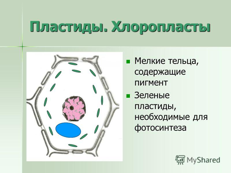 Пластиды. Хлоропласты Мелкие тельца, содержащие пигмент Мелкие тельца, содержащие пигмент Зеленые пластиды, необходимые для фотосинтеза Зеленые пластиды, необходимые для фотосинтеза